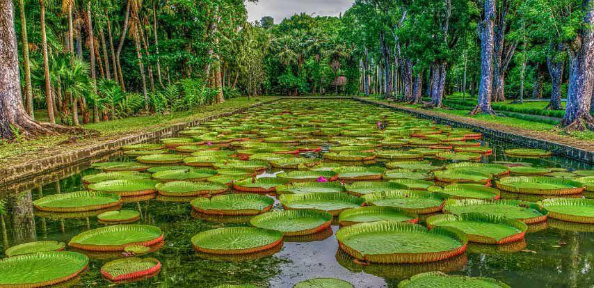 Jardin botanique Sir Seewoosagur Ramgoolam